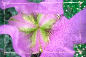 fleur zen violet vert