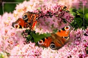zazen papillon